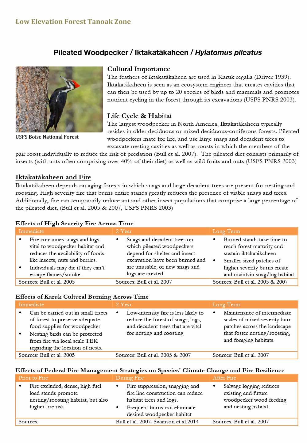102-woodpecker