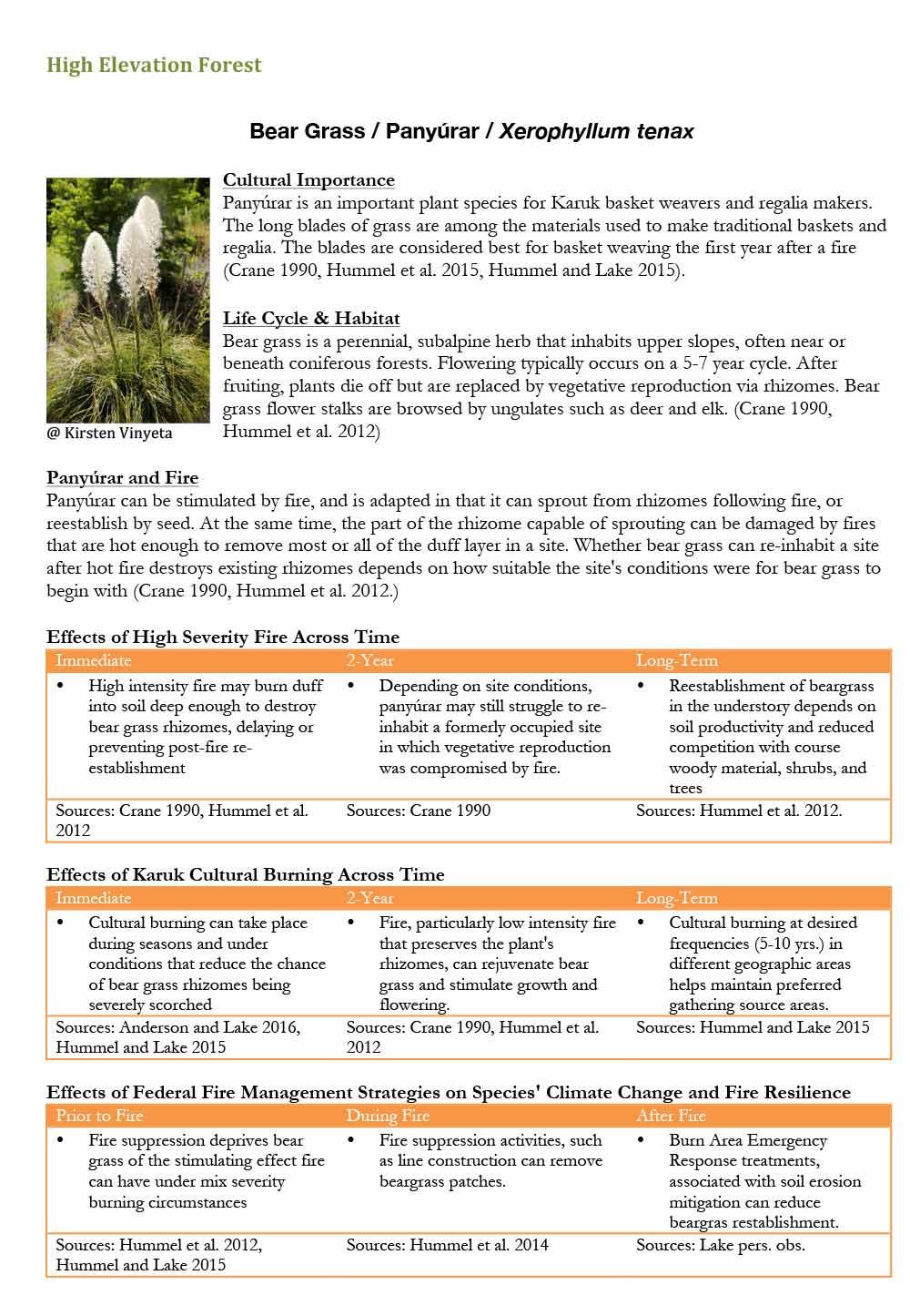119-bear-grass