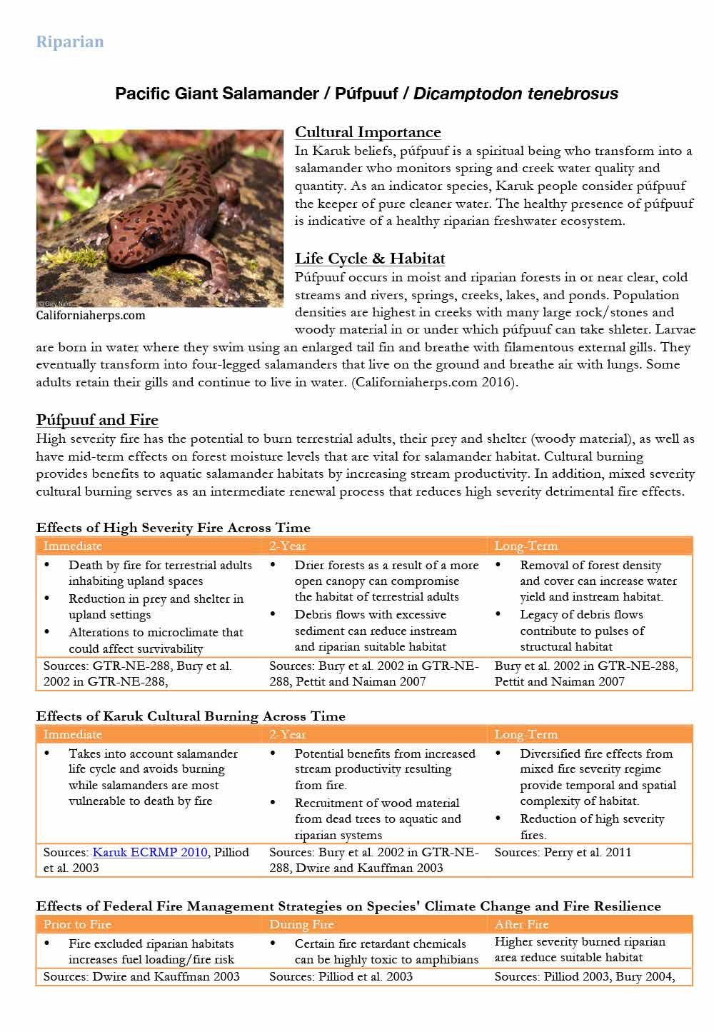 89-salamander